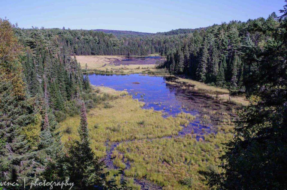 Beaver Pond, Algonquin Park, Ontario